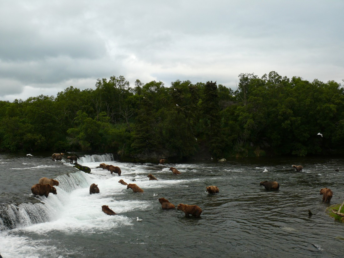 Brooks Lodge - Katmai National Park - Alaska - Doets Reizen