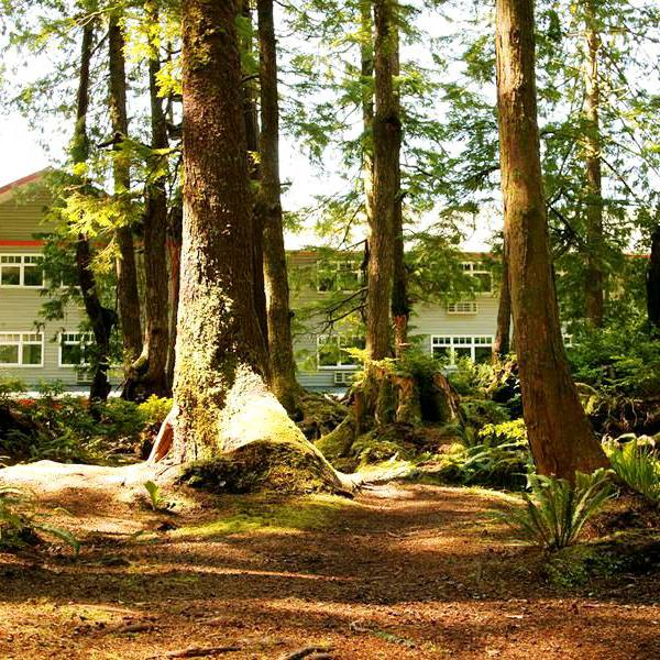 Jamie's Rainforest Inn - 4