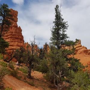 Via Antelope canyon naar Bryce - Dag 9 - Foto