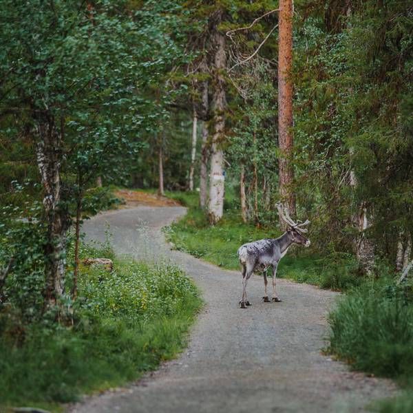 Levi Lapland - Doets Reizen - Vakantie Finland - Credits VisitFinland