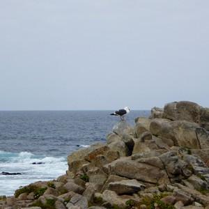 Via de 17-mile-drive naar Pismo Beach - Dag 21 - Foto