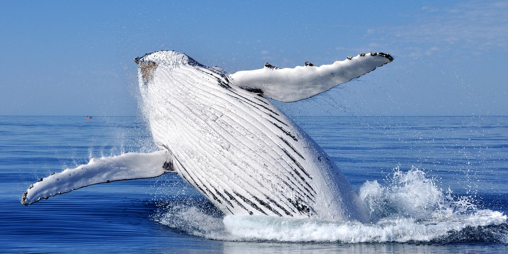 Walvissen Spotten - Boston - Massachusetts - Doets Reizen