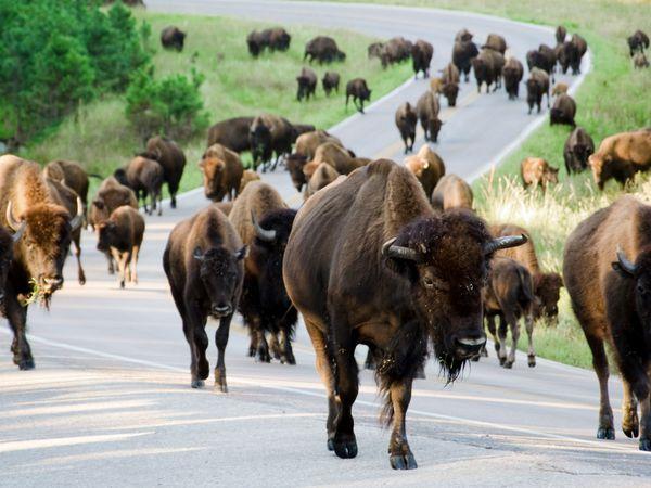 Custer State Park - South Dakota - Amerika - Doets Reizen