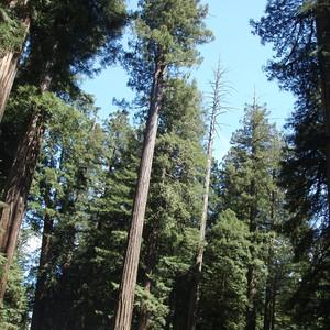 Crescent City en Redwood NF - Dag 23 - Foto