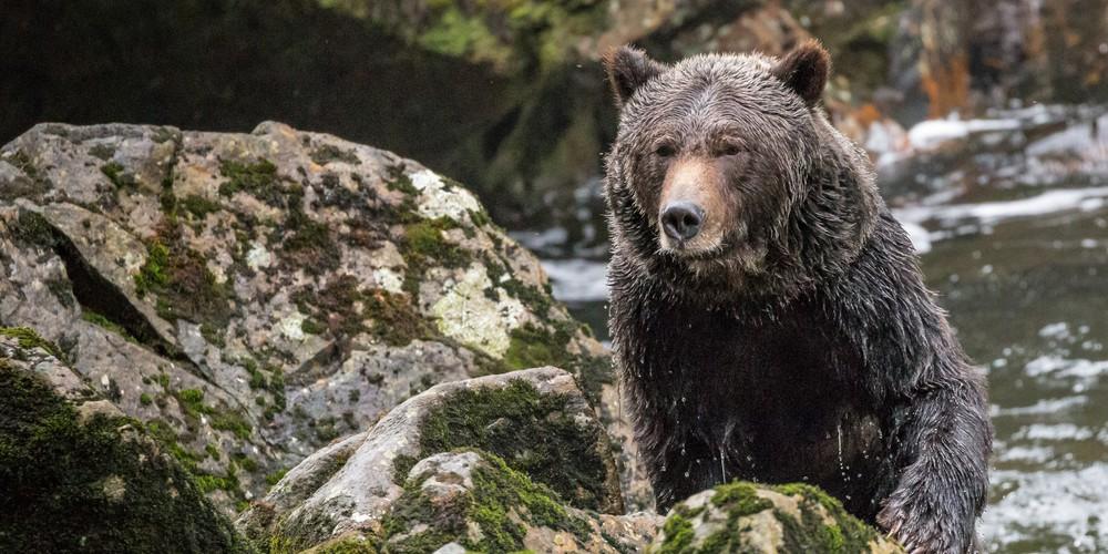 Seawolf Adventures - British Columbia - Canada - Doets Reizen
