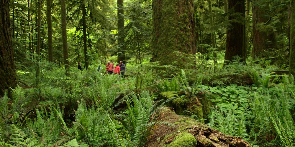 McMIllan Provinciale Park - Cathedral Grove -Vancouver Island - British Columbia - Canada - Doets Reizen