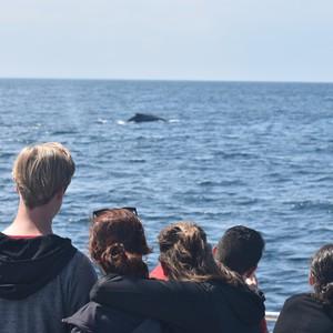 Dag 21 – Walvissen spotten vanaf Boston Long Wharf en Boston Brighton EF - Dag 21 - Foto
