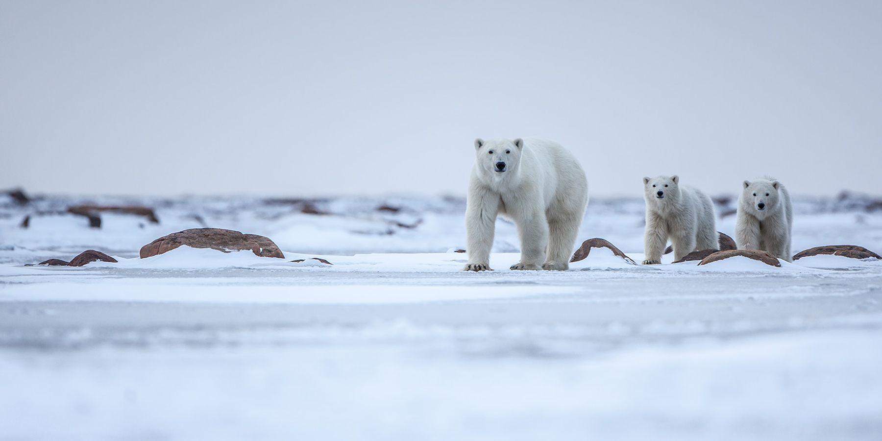 Wildlife - Nunavut - Canada - Doets Reizen