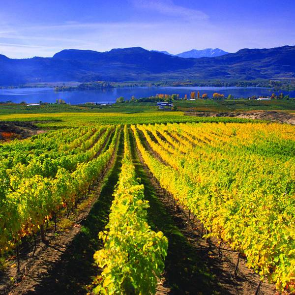 Mission Hill Family Estate - Kelowna - Okanagan Valley - British Columbia - Canada - Doets Reizen
