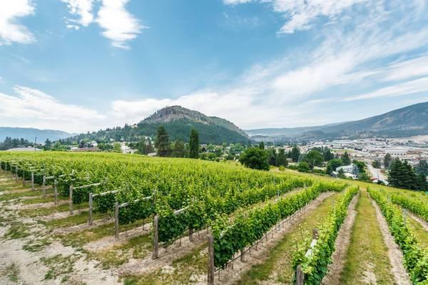 Grizzli Winery - Kelowna - Okanagan Valley - British Columbia - Canada - Doets Reizen