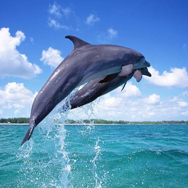 Dolfijnen - Florida - Doets Reizen