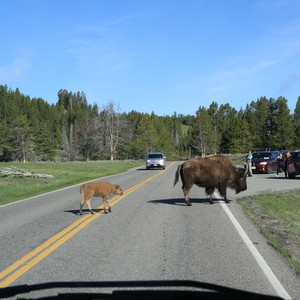 2e dag Yellowstone - Dag 13 - Foto