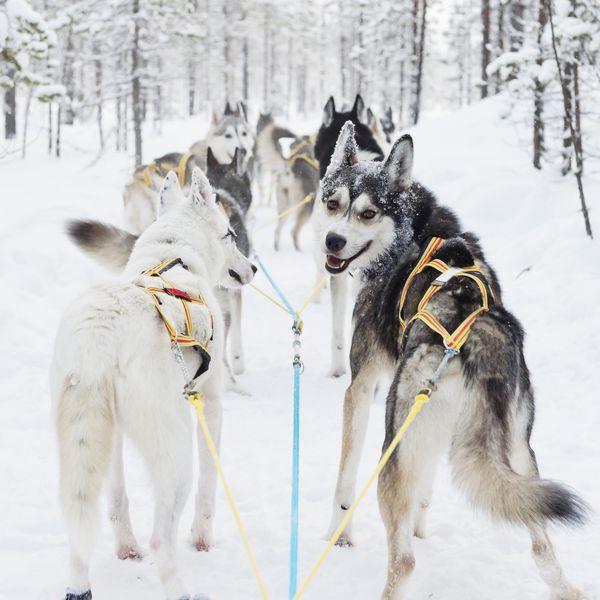 Hondenslee Arctic Bath -  Doets Reizen - Vakantie Zweden - Credit Arctic Bath Hotel