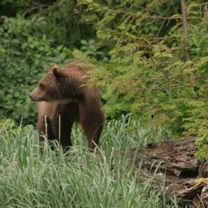 Naar Knight Inlet voor de Grizzly Bear Tour - Dag 9 - Foto
