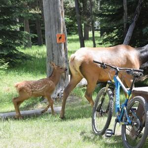 Jasper National Park - Dag 14 - Foto