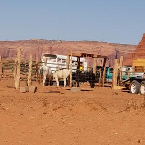 Op naar de Grand Canyons. - Dag 9 - Foto