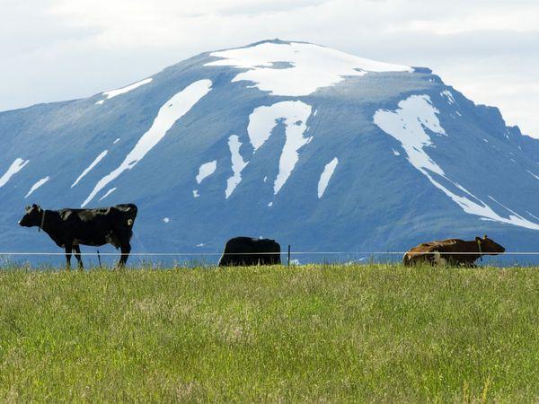 Troms og Finnmark - Doets Reizen - Vakantie Noorwegen - Credits Visitnorway.com