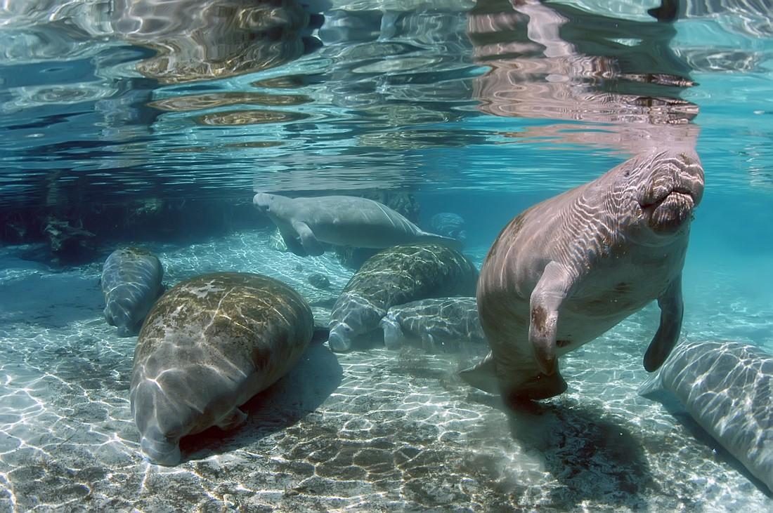 Crystal River - Florida - Doets Reizen