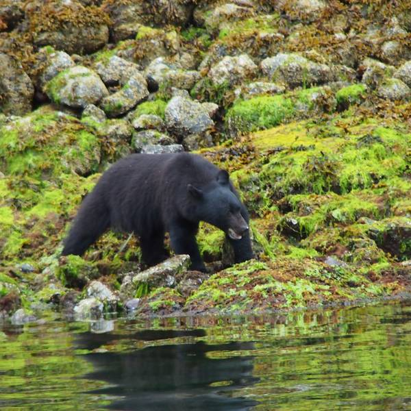 Wildlife Pacific Rim National Park - Vancouver Island - British Columbia - Canada - Doets Reizen