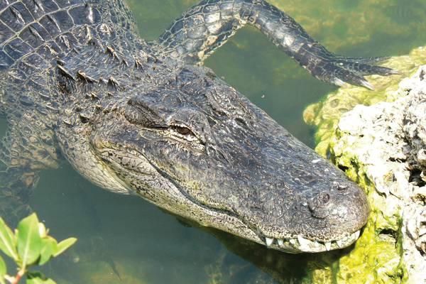 Airboat Tour - Everglades National Park - Florida - Doets Reizen