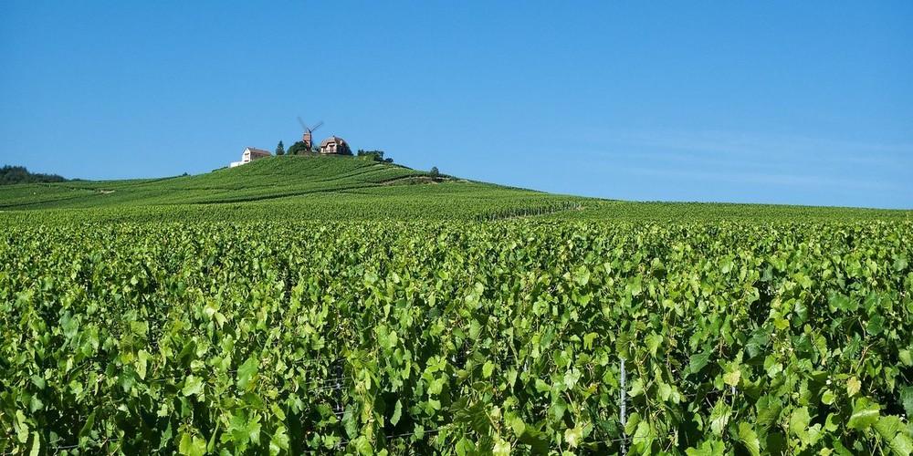 Champagnestreek wijnboerderijen | Frankrijk | Doets Reizen