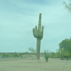 Tucson - aankomst - Dag 18 - Foto