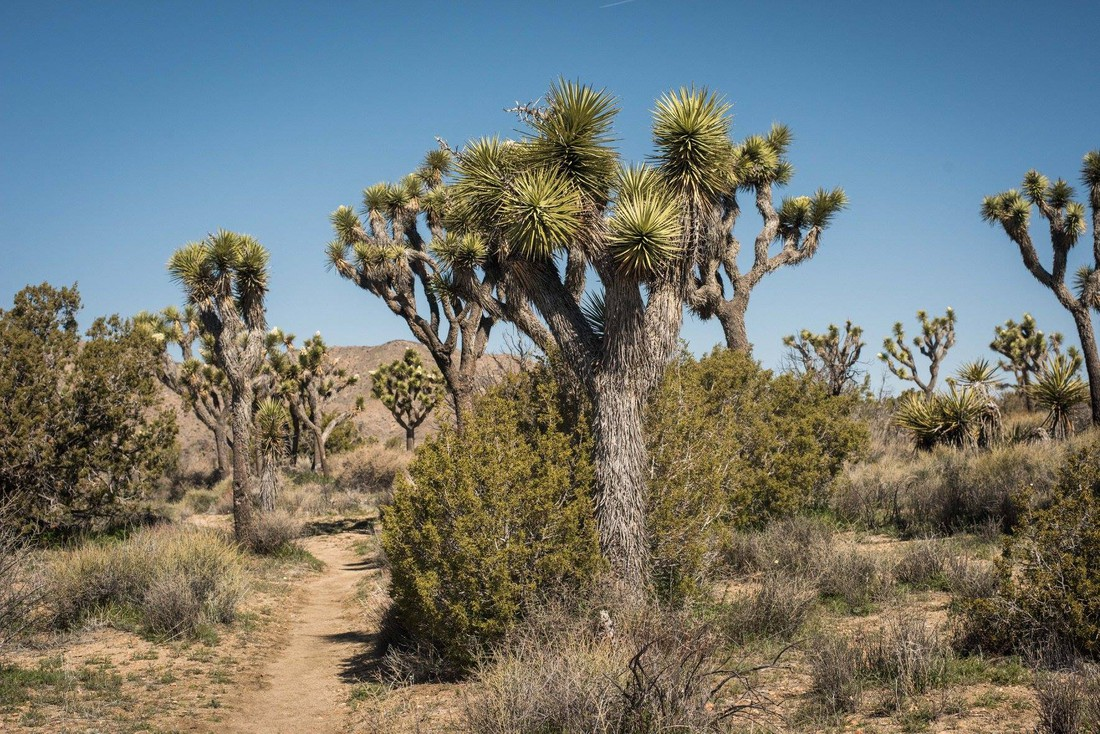 Joshua Tree National Park - California - Amerika - Doets Reizen