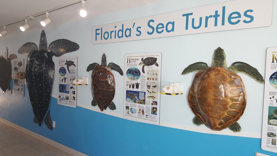 Turte Hospital - The Keys - Florida - Doets Reizen