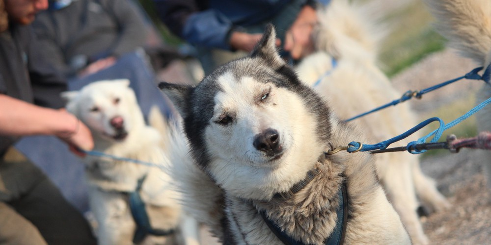 Dog Mushing Churchill - Manitoba - Canada - Doets Reizen