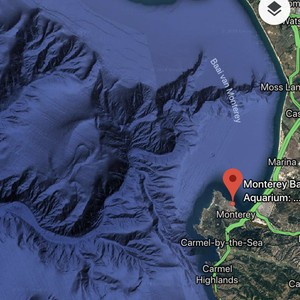 Monterey Bay Aquarium and Big Sur - Dag 6 - Foto