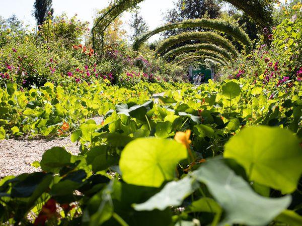 Giverny tuin monet - Doets Reizen - Vakantie Frankrijk - Credits Pixabay
