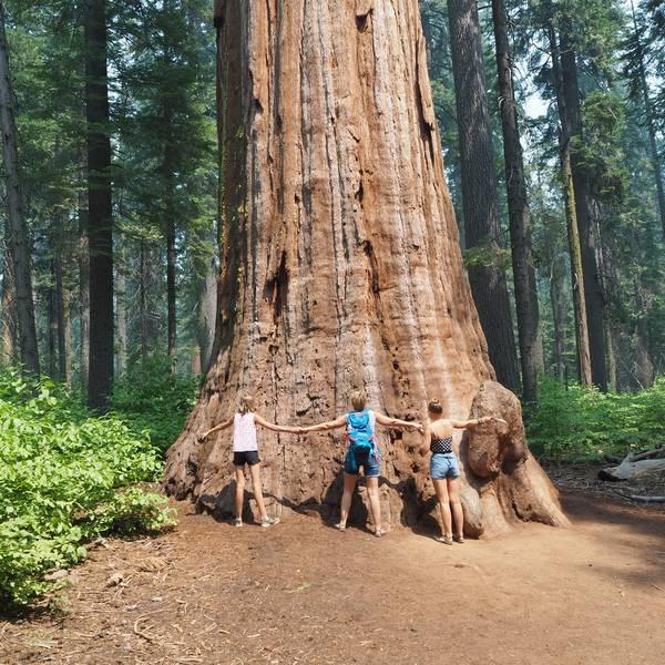Sequoia - Mammoth Lakes - California - Amerika - Doets Reizen