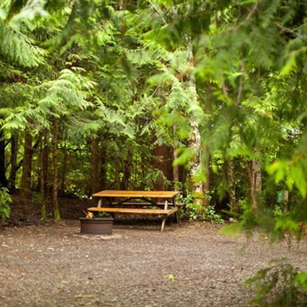 Surf Junction Campground, bosrijke camperplaats