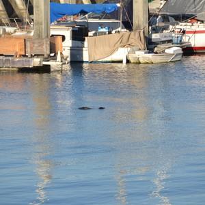 San Francisco - Monterey - Dag 4 - Foto