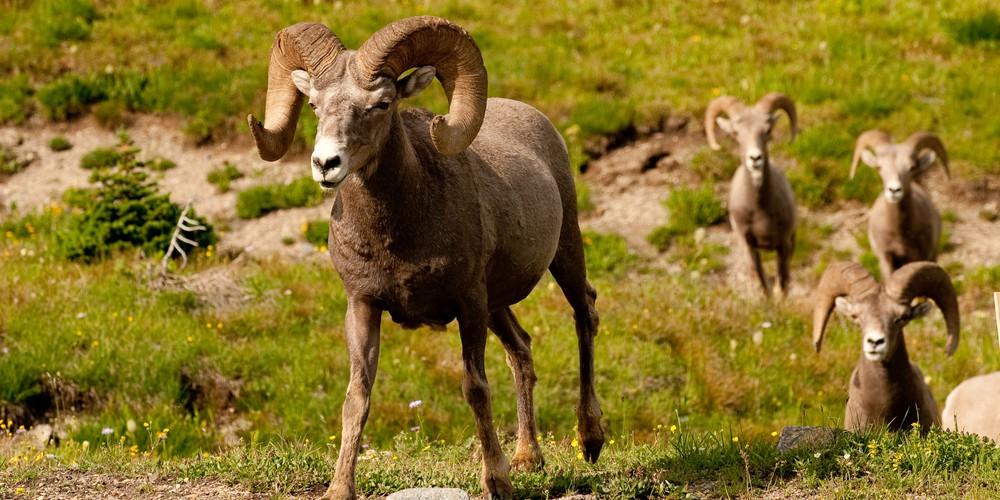 Beartooth Pass - Montana - Yellowstone - Wyoming - Amerika - Doets Reizen