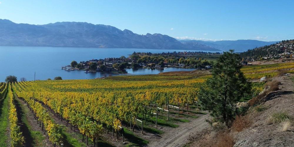 Quails' Gate - Kelowna - Okanagan Valley - British Columbia - Canada - Doets Reizen