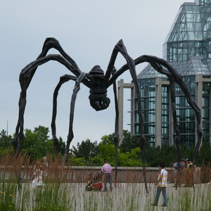 Algonquin parc en Ottawa - Dag 4 - Foto