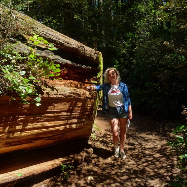 Redwood National Park - California - Amerika - Doets Reizen