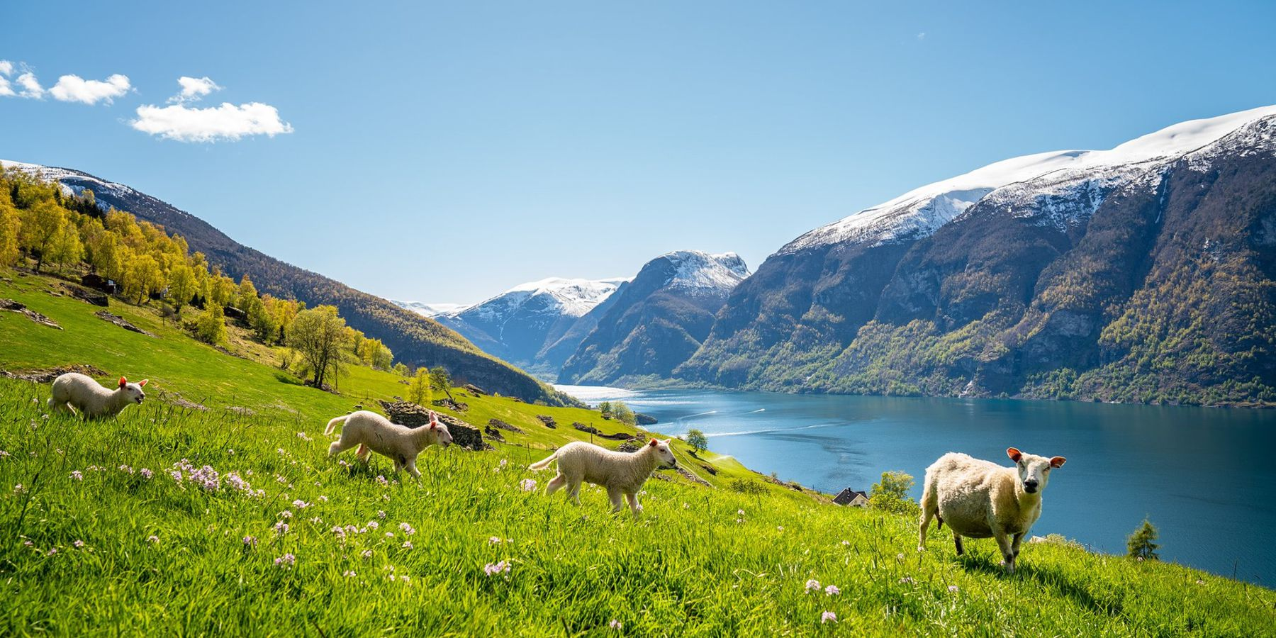 Flåm, Vestland - Vakantie Noorwegen - Doets Reizen - Credits to Visit Flam