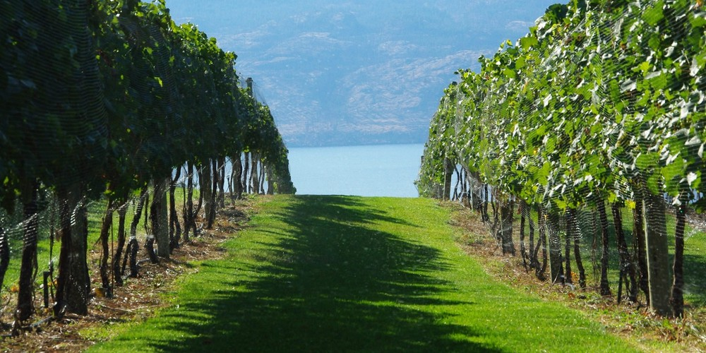 Mission Hill Family Estate Winery  - Kelowna - Okanagan Valley - British Columbia - Canada - Doets Reizen