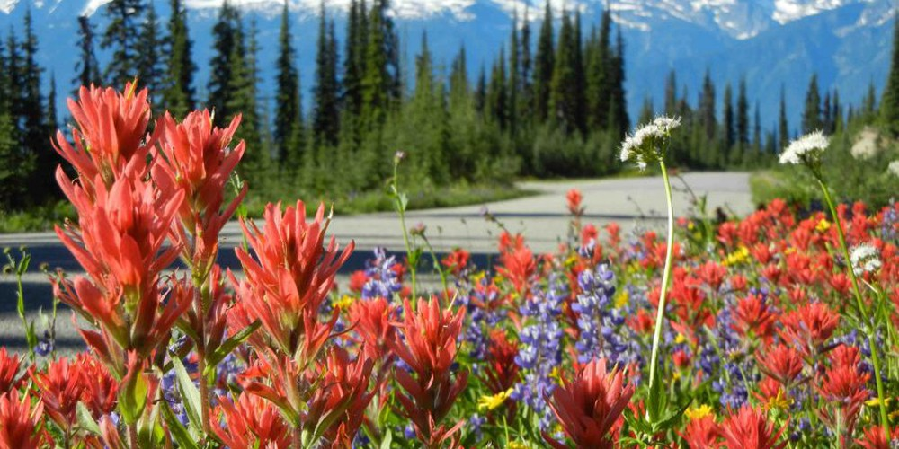 Mount Revelstoke National - British Columbia - Canada - Doets Reizen