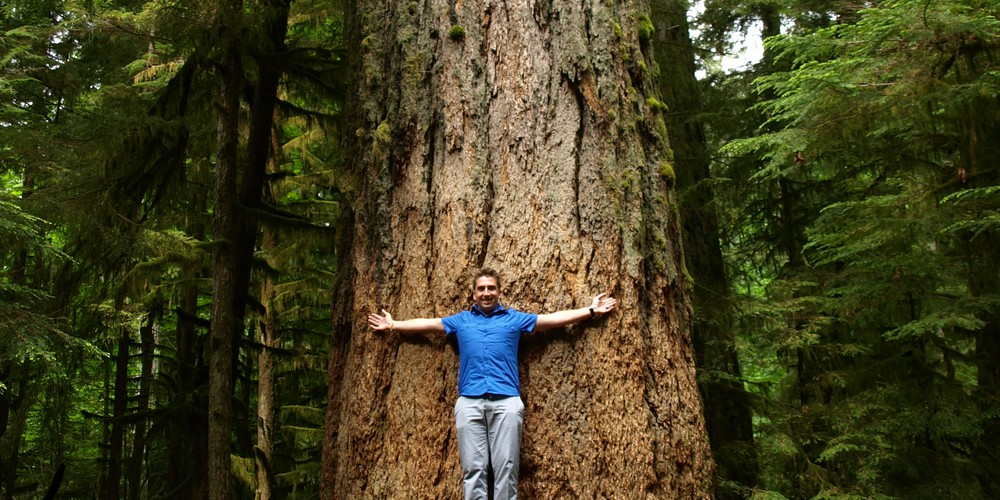 McMIllan Provincial Park Cathedral Grove Vancouver Island British Columbia
