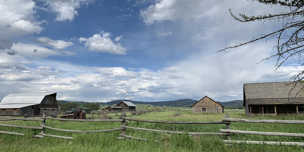 Wildlife Safari - Grand Teton National Park - Wyoming - Doets Reizen