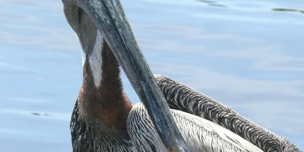 Everglades NP Florida