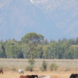 Van Grand Teton NP naar Park City - Dag 15 - Foto