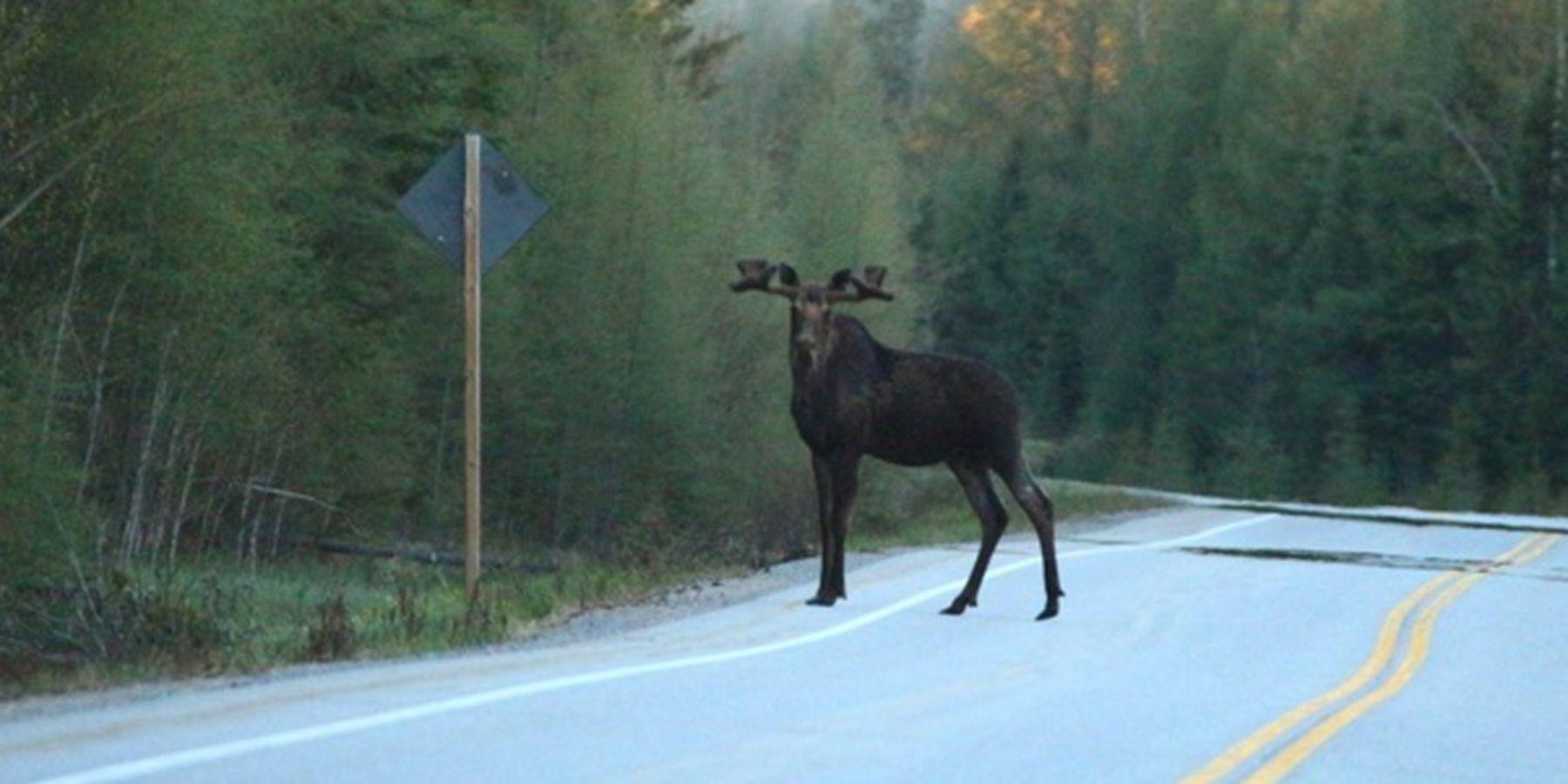 Hornepayne - Ontario - Canada - Doets Reizen