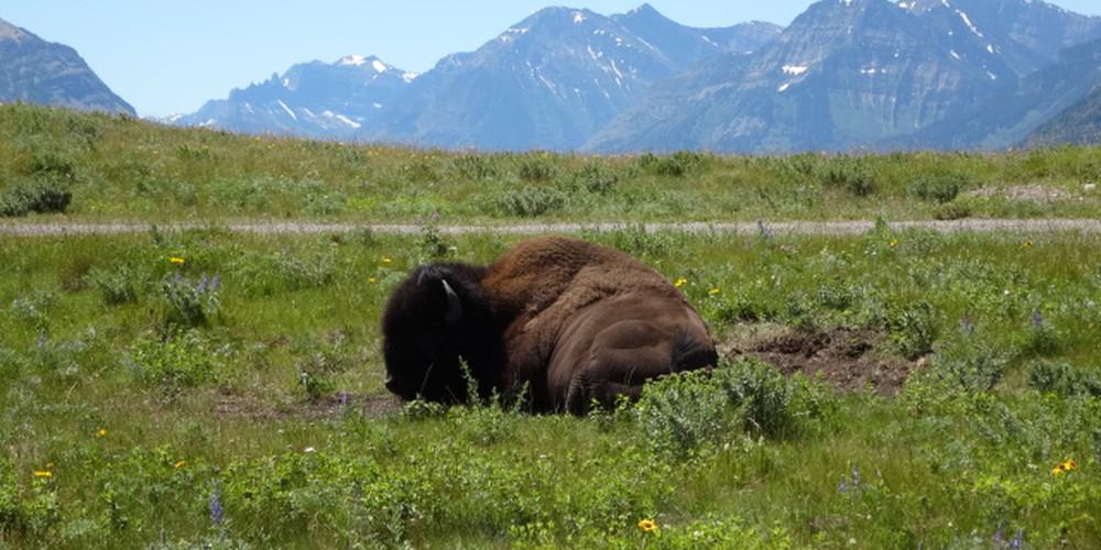 Waterton Lakes National Park - Alberta - Canada - Doets Reizen