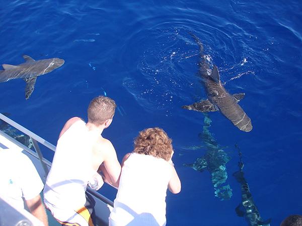 Shark Cage Tour Hawaii Amerika
