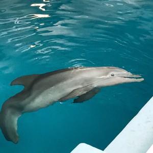 Clearwater Marine Aquarium - Dag 20 - Foto