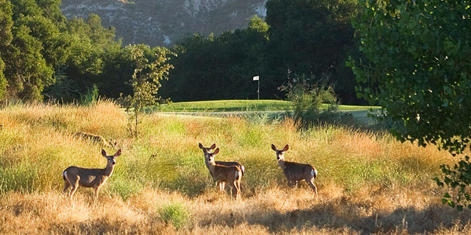Santa Barbara - Rancho San Marcos